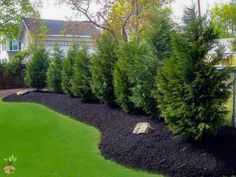 70 Gorgeous Backyard Privacy Fence Decor Ideas on A Budget 39 – Home Design Privacy Landscaping, Backyard Privacy, Landscaping Supplies, Backyard Fences, Landscaping Tips, Garden Landscaping, Arborvitae Landscaping, Fence Trees, Backyard Trees