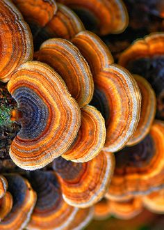 Texture and Pattern: Turkey Tail Fungi Patterns In Nature, Textures Patterns, Nature Pattern, Organic Patterns, Fotografia Macro, Mushroom Fungi, Natural Forms, Natural Texture, Amazing Nature