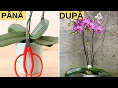 Orhideea ta va înflori tot anul. 7 secrete importante de îngrijire - YouTube