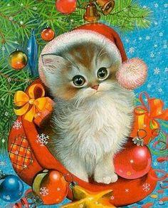 gattino con cappello santa klaus, natale
