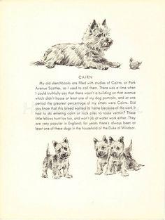 OMG!!! @jperchinsky CAIRN TERRIER 1940s Dog Print Puppy Print Art by TheWholeBook, $12.00