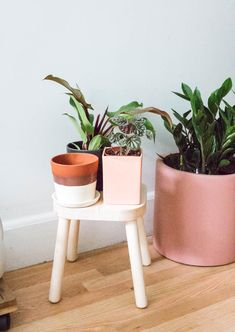 Learn how to style your home with plants and get amazing tips from NYC's The Sill. Indoor Planters, Outdoor Plants, Plants Indoor, Besties, Plant Aesthetic, Aesthetic Rooms, Mosquito Repelling Plants, Plant Science, Nyc