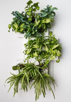 Image of plants on Designeros.com