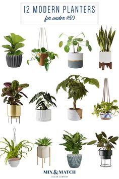 12 Modern Planters and How To Pick The Right One For Your Plant — Mix & Match Design Company 12 Mode White Planters, Modern Planters, Indoor Planters, Diy Planters, Plants Indoor, Outdoor Plants, Potted Plants, Garden Plants, Pallet Planters
