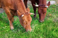 Dairy Precedes the Advent of Agriculture in Human History via @The Healthy Home Economist