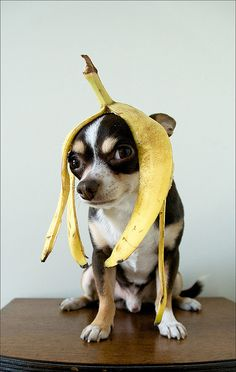 Banana moment... patient dog.