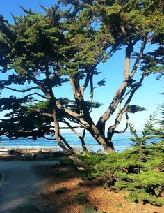 Carmel Beach viewed from the trees along Scenic. Carmel Beach, Carmel By The Sea, Big Sur, Trees, California, River, Mountains, Outdoor, Outdoors
