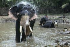 kerla - animal - elephant - India