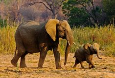 astonishing wild animals - Google Search