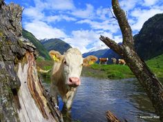 Wanderurlaub in Kärnten, Nationalpark Hohe Tauern Austria, Animals, Road Trip Destinations, National Forest, Hiking, Viajes, Animales, Animaux, Animal Memes