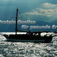 Protein Quellen für gesunde Ernährung, für Ihre Fitness