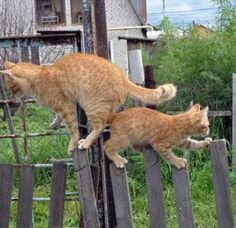 Cats on the fence 4/4
