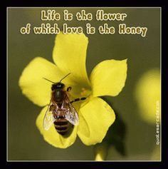 funny plant quotes   quotes short flower quotes beautiful flower quotes flower quotes about ...