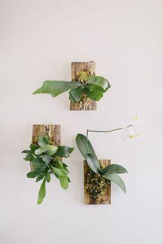 ビカクシダの板付けで 壁を飾る  養生ランと一緒に