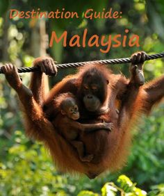 Destination Guide - Malaysia. What to see and do and some resources to help you plan your trip: http://bbqboy.net/malaysia-guide-travel-tips/ #malaysia