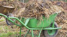 Wanneer geef je Bemesting? - KleineTuinen.nl Prunus, Wheelbarrow, Geraniums, Compost, Garden Tools, Lawn, Composters, Peach, Outdoor Power Equipment