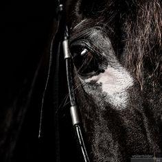 Pferdeportraits Horses, Animals, Animal Photography, Photoshoot, Animales, Pictures, Animaux, Horse, Animal