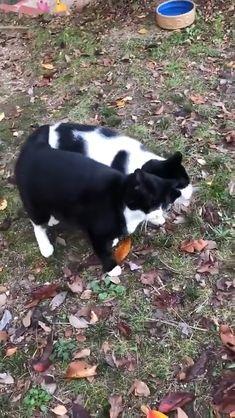 Cute Little Animals, Cute Funny Animals, Cute Cats, Funny Cats, Cute Animal Videos, Cute Animal Pictures, Phteven Dog, Beautiful Cats, Animals Beautiful