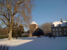 Le platane de 400 ans, sur la pelouse du Château de Vault de Lugny; labellisé Arbre Remarquable.