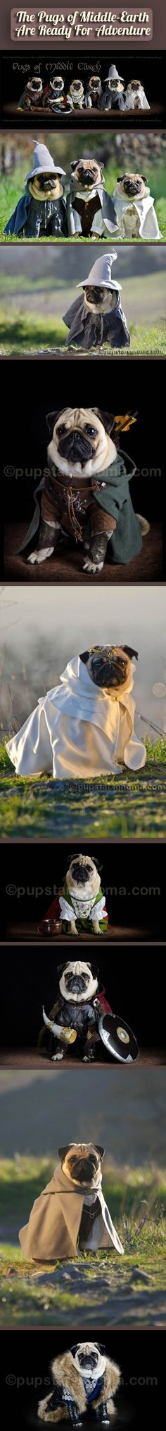 The pugs of Middle Earth. Love this and I don't even like pugs