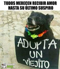 New memes love dog 36 ideas The Animals, Love Pet, I Love Dogs, Cute Puppies, Cute Dogs, Les Fables, New Memes, Funny Memes, Mundo Animal