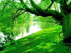 Lo oculto se esfuma con sólo traerlo al espejo del consciente. Lo que se hace consciente, se oxigena y se sana.