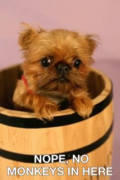 Puppy in a barrel