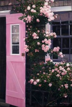 The Pink Door - Siasconset, Nantucket; want a pink door for my store Jardin Decor, Climbing Roses, Everything Pink, Pink Aesthetic, Pink Roses, Pink Flowers, Tea Roses, Exotic Flowers, Yellow Roses