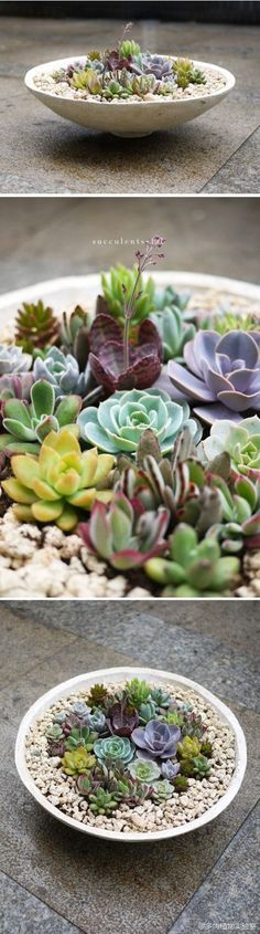 Variety of succulents in a dish garden - Gardening Designing