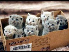 Here's a Box Full of Kittens! Feeling Down? Here's a Box Full of Kittens!Feeling Down? Here's a Box Full of Kittens! Baby Animals, Funny Animals, Cute Animals, Funny Cats, Funniest Animals, Small Animals, Nature Animals, Cute Kittens, Cats And Kittens