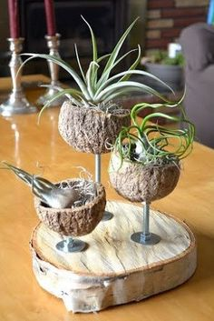 air plants and more! - Recycled Crafts - Club Pictures - Amazing air plants and more! – Recycled crafts … – -Amazing air plants and more! - Recycled Crafts - Club Pictures - Amazing air plants and more! Recycled Planters, Recycled Crafts, Air Plant Display, Plant Decor, Decoration Plante, Deco Nature, Deco Floral, Rustic Contemporary, Succulents Garden