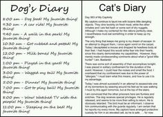 Why I love dogs.