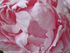 Peony's petals