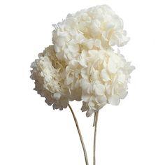Results for preserved hydrangeas in cream