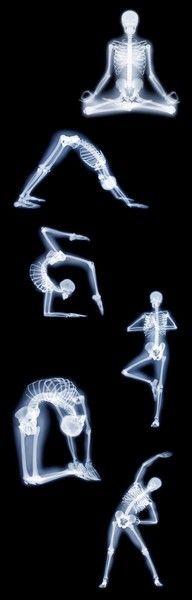 Yoga Bones office art