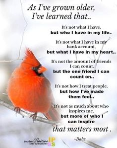 True Quotes, Great Quotes, Quotes To Live By, Funny Quotes, Motivational Quotes, Daily Quotes, Bird Quotes, Lessons Learned In Life, Life Lessons