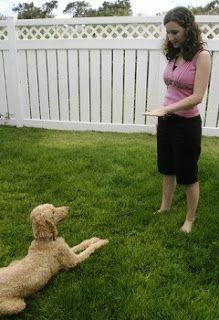 8 Positive Dog Training Tips That Work