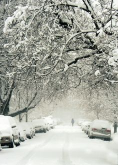The way that snow can muffle the sounds on the street and turn it into a winter wonderland.