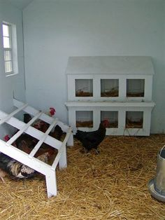 When ever a person wants to raise chickens, it's a good idea to make certain that they construct a chicken coop that best suits their own requirements. Make sure you find the best plans to be able to make your own. Inside Chicken Coop, Easy Chicken Coop, Chicken Pen, Chicken Coup, Backyard Chicken Coops, Chicken Coop Plans, Building A Chicken Coop, Chickens Backyard, Chicken Roost