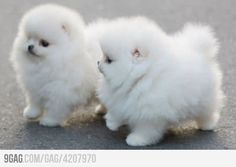 """It's so fluffy I'm gonna dieeee"" How adorable are these puppies?!"