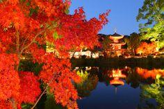 最高の紅葉を求めて。京都で至福の紅葉を見よう! | キナリノ