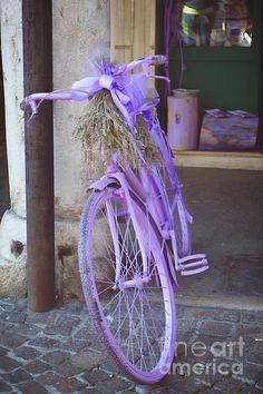 http://fineartamerica.com/featured/1-lavanda-bici-photos-by-zulma.html?newartwork=true #Zulma #Italy #purple #bicycle #photosbyzulma
