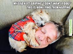 Funny Memes - when I was little my dad said the same thing about a pet cat & found our first cat snuggled up with him when we got home from the store the first day....& of course many days after