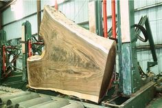 """Slide 2: This crotch photo from Talarico Hardwoods shows a crotch with an almost perfect shape. The branches meet at an angle that is a little steep, but notice how the natural edge between the branches forms a """"U"""" shape instead of a """"Y"""" shape with a hard angle. This is a big one, too."""
