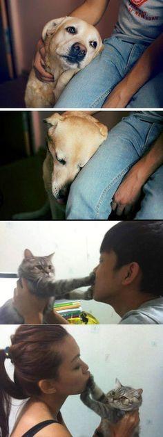 honden versus katten