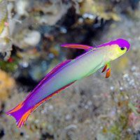 What's the best saltwater aquarium fish to start with? Here's a list of ten easy care marine fish that you can start with in your saltwater aquarium.