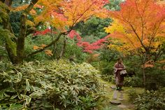 """Woman in Koto-in Garden - A woman wandering through the Koto-in sub-temple of Daitoku-ji.  <a href=""""http://www.kyotographer.com"""">kyotographer</a>   <a href=""""https://500px.com/moritzmarutschke"""">500px</a>   <a href=""""http://streetsofkyoto.com"""">streets of kyoto</a>   <a href=""""https://twitter.com/@kyotographer"""">twitter</a>"""