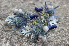 Navy blue and gray silver boutonnieres corsages  Www.sophisticatedfloral.com Dusty miller Brunia privet berry eryngium sea holly