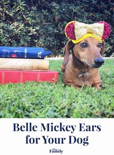 These DIY Belle Mickey Ears are the perfect craft for your pup who wants adventure in the great wide somewhere. Walt Disney World, Disney Family, Disney Sidekicks, Disney Dogs, Disney Mickey, Disney Crafts, Mickey Ears, Diy Stuffed Animals, Cute Funny Animals