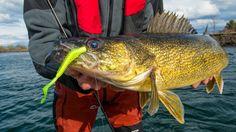 Learn How to Drop Shot Big Walleyes